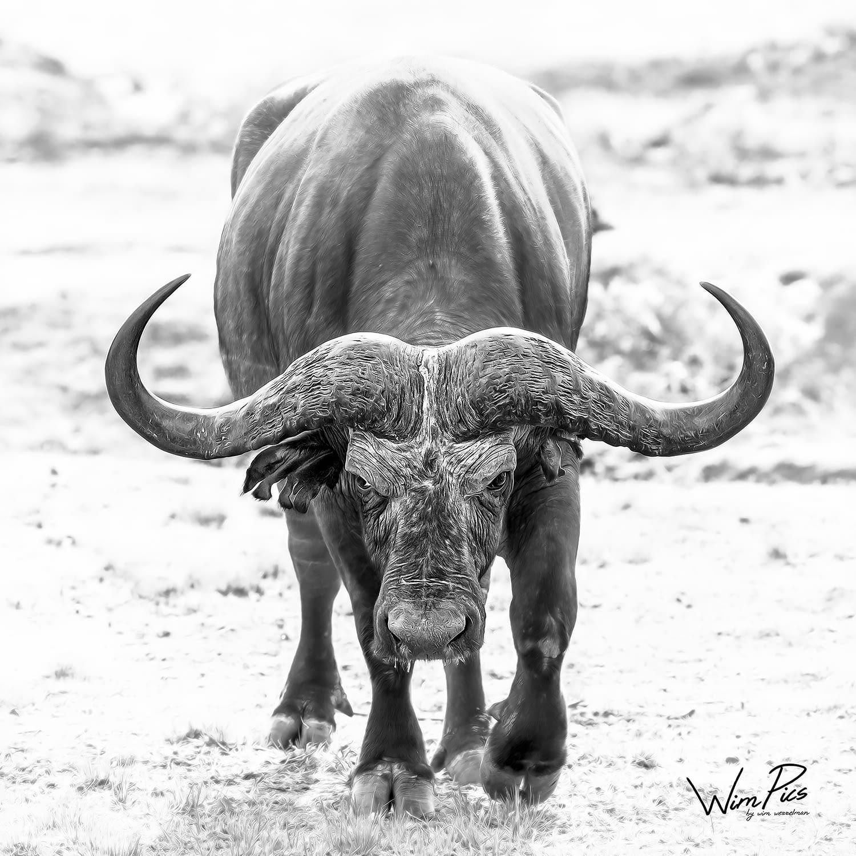 Wildlife print for sale